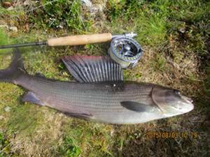 Lars Anderssons vinnarfiske, en harr som vägde 1,920 g.