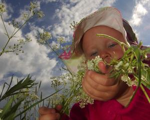 Även de minsta drog sitt strå. Lilla Ebba Jennerfeldt var ivrig fast hon i många fall var kortare i växten än de ståtligaste blommorna.