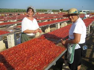 På Italiens klack träffade vi dessa glada damer som i stekande sol stod och delade tomater och la ut dem så att de skulle ligga och soltorka någon eller några dagar.