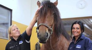 Som djursjukskötare har Angelica Messa ett nära samarbete med veterinären Ingela Johansson.