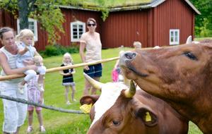 Nationaldag på Skräddartorp. Med korna, gården och naturen. Nelly Wolke har fått hjälp upp på stängslet av mamma Lena.