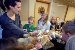 Kolla kraniet! Lina Thelin, biolog från rovdjurscentret De 5 stora har rovdjursskola med förskolebarnen i Björktjära.