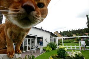 En katt som nyfiket spanar.