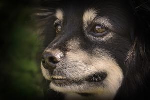 Min hund och jag var ute i trädgården en varm dag, jag sitter och knappar på kameran när jag tittar upp och ser hans ögon.