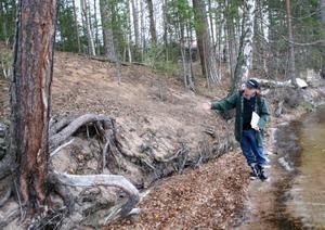 Tallar. Under årens lopp har bröderna Jonas Forsling och Jan-Olof Forsling tvingast fälla åtskilliga tallar eftersom stranden eroderar bort. Bröderna anser att en allt för hög vattennivå ligger bakom erosionen. På bilden ser vi Jonas Forsling.