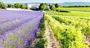 Åk på en livsnjutarresa i Frankrike, bland vin och lavendel.