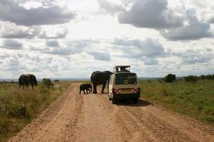 Några meter ifrån en elefantfamilj på savannen.fynd. Passa på att fynda vackra tyger och saris på stranden.