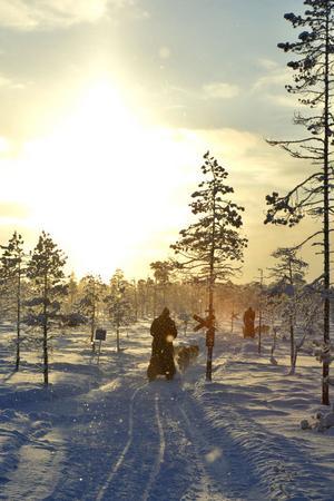 Det var minus 20 grader och underbar vintermiljö när ekipagen gav sig ut på de stora myrarna vid Nornäs.
