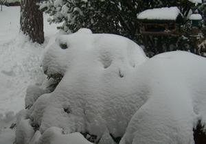Isbjörnen ligger vid entren och vaktar vårt hus. Han är helt av snö överde gröna växterna.
