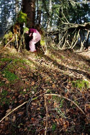 Med en stor pil av pinnar visar Sara Adolfsson var man ska leta efter henne. Själv söker hon skydd i den koja som hon har byggt ihop med förskolekompisarna. För man ska hålla sig vid ett och samma träd och inte springa runt, det har de lärt sig.