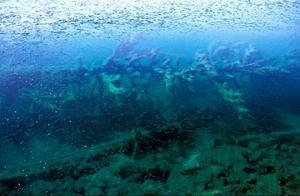 Under vattnet har de nedfallna trädstammarna samlat på sig kalkavlagringar. Enligt författarna är det just kalken som är källan till den gröna färgen.