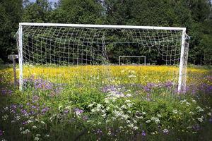 Fotbollen står i blom