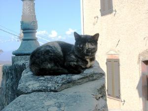 Sömnig katt i Vetulonia.