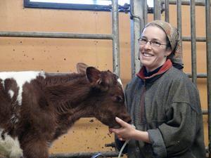 Åsa Gustafsson får hjälpa den 12 timmar gamla kalven med att få i sig dagens första matranson. Åsa och hennes bror Mats är nominerade till Årets gröna guld vid Guldgalan i veckan.