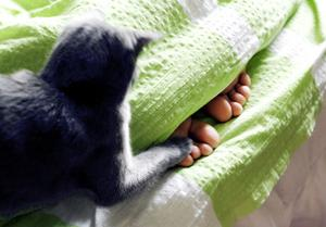 Ibland är kattens lek inte så uppskattad.