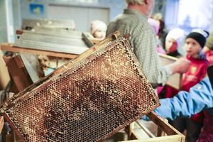 En av många ramar som Alf tagit ut från en bikupa. Just den här har bina använt för att föda upp yngel.