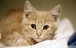 Det framgår inte av anmälan hur unga katterna var när de såldes.