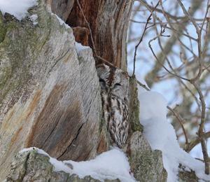 Denna fågel har jag sett hela vintern i sitt träd.Hoppas bara att den harklarat sej .