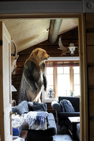 Björnen som håller koll på alla som sitter i soffan kommer från en lyckad jaktresa till östra Ryssland.