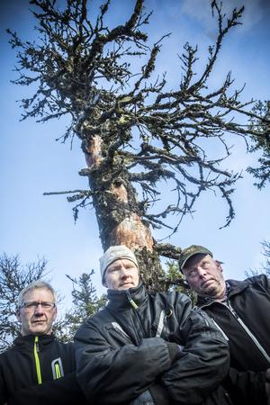 Joel Nord Johnny Hördell och Anders Bäckebjörk. Skogsägare i Offerdal.