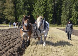 Från Sörmland. Hästarna Rambo och Ruben från Bettna körs av Johan Eriksson och Cecilia Toft, som ser tävlingen som en uppladdning inför SM.