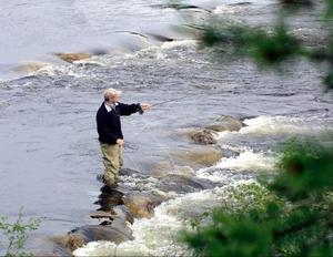 Fiskeförbud i nedre Ljungan nästa år.