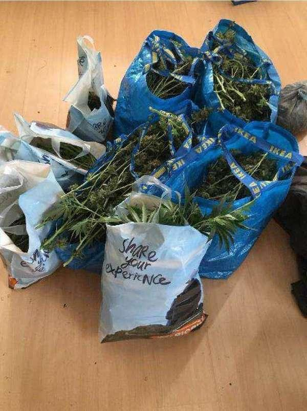 Polisen fann över 8 kg cannabis i huset.