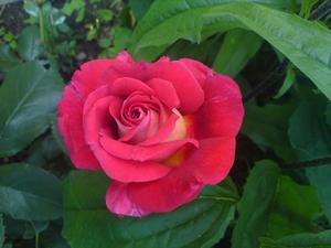 ännu kan man njuta av sommarens blommor