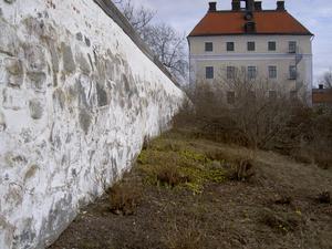 Blommande vintergäck vid slottsmuren.