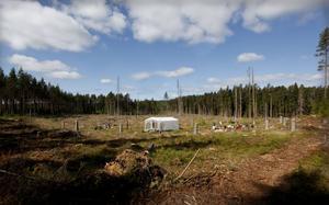I dag ett kalhygge i skogen, men för 10 000 år sedan var detta en havsvik. Bakom  arkeologernas tält var det vatten då.