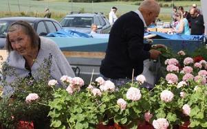 Pelargonier kunde man, bland mycket annat, köpa på marknaden.FOTO: HENRIK BOMAN