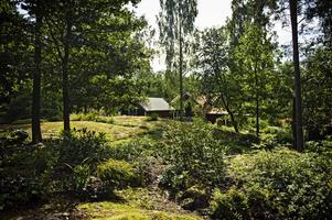 Berglunds har fraktat hem massor med stenar till sin tomt. De har också ett naturligt berg i en del av den 10 000 kvadratmeter stora tomten. I bergsskrevorna har de planterat växter. Förstås.