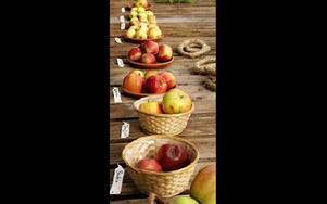 Mängder av olika äppelsorter