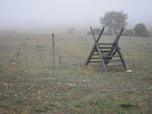 En promenad i dimman