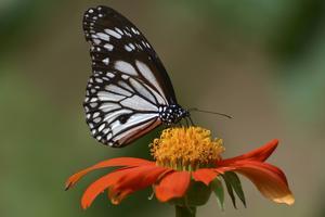 Tropiska blommor och stora fjärilar är något som Flower island har gott om.   Foto: Anders Pihl