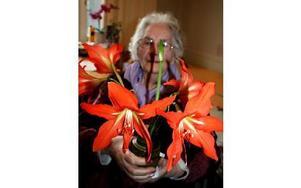 När hon får se sin mammas blomma så minns Doris Mattsson gamla tider. FOTO: LINNEA JOHANSSON