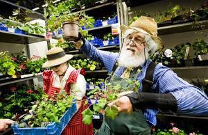 Pelargonpassion. Trädgårdsmästare Mats Asplund slår ett slag för det enkla, att inte krångla till saker och ting utan vara glad för det man har. Här säljer han och hustrun Margareta blommor på mässan