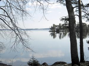 Vilka är de kortsiktiga respektive långsiktiga förändringarna på vattenmiljön efter skogsbrand? SLU Syftet med studien är att se hur skogsbrand påverkar vattenmiljön på lång och kort sikt. Utländska studier visar på att skogsbränder kan ha en stor påverkan på vattenmiljöer.Undersökningarna genomförs i Hälleskogsbrännan genom standardiserade metoder i cirka 50 vattendrag, från små diken i torvmark till större bäckar.
