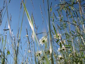Äntligen sommar och man kan bara njuta i gröngräset!