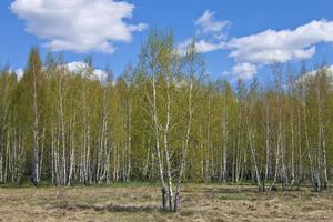 Torr fjolårsgräs är extra lättantändligt.