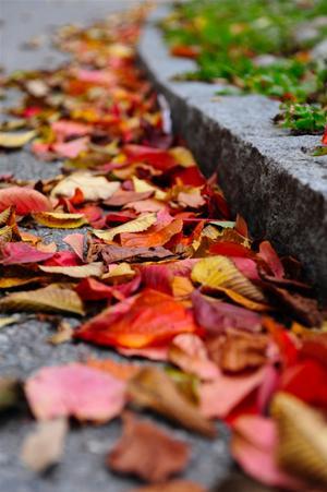 Hösten har flyttat från träden och ner på gatorna.