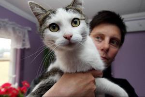 Katten mår bra och hoppas kunna få ett nytt hem. Enligt uppgifter handlar kattens öde om ett planerat avlivningsförsök som gick fel. Foto: Håkan Degselius