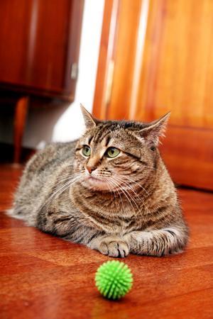 Tvinga aldrig en katt att leka. Den signalerar tydligt när den inte vill.
