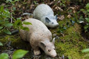 Ett par råttor smyger omkring bland mossan.