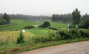 Det är nästan svårt att se var sjön börjar, så igenväxt är Edevågen nu.