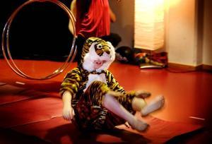 MORR. En ilsken tiger hoppade genom ringar och rymde sedan från sin bur.