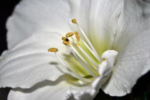 vart grymt sugen på att fota, så jag tog fram kameran och fotade denna blomma :)