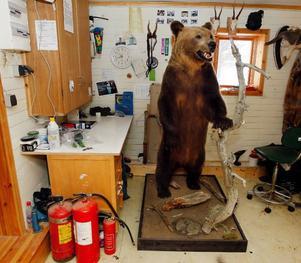 Den här björnhannen har stått i sitt hörn sedan augusti och väntat på att ägaren ska få ta hem den till Norge.
