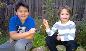 mums! Smultronbusken i Sätra bär frukt i november. Till Jesper och Tomas Larssons stora glädje.