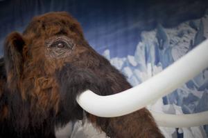 Kan svenska språket gå mammutens väg?